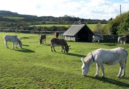 34140-isle-of-wight-donkey-sanctuary-wroxall-01