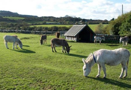 34140-isle-of-wight-donkey-sanctuary-wroxall-01
