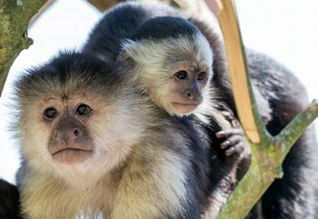 Picture of two monkeys